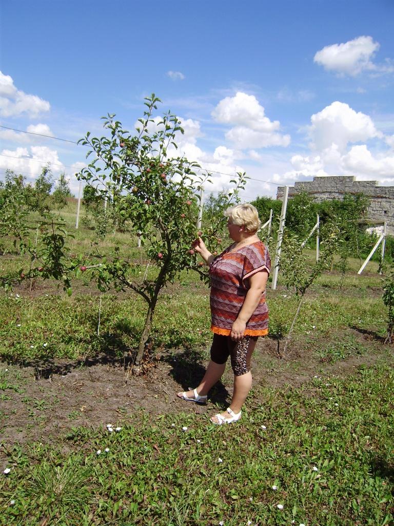 Провідний фахівець - агроном відділу фітосанітарних процедур Поворозник Л.С. проводить обстеження саду на бактеріальний опік плодових