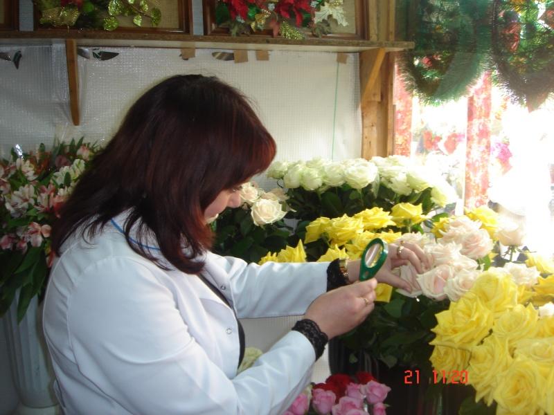Завідувач відділу фітосанітарних процедур Мартович О.М. при огляді зрізів квітів на виявлення західного квіткового трипса