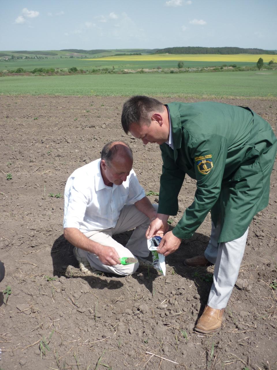 Провідний фахівець-агроном відділу фітосанітарних процедур Діденко В.С. при обстеженні посадок картоплі на виявлення золотистої картопляної нематоди та раку картоплі