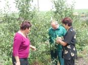 Заступник завідувача відділу фітосанітарних процедур Чубко М.І. проводить обстеження яблуневих садів на виявлення заселення яблуневою міллю