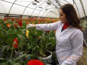 Провідний фахівець - міколог Погоріла М.В. під час обстеження теплиць на виявлення західного квітково трипса