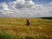 Провідний фахівець - агроном відділу фітосанітарних процедур Поворозник Л.С. проводить обстеження імпортних посівів ячменю