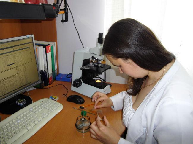 Провідний фахівець - міколог Погоріла М. В. під час проведення мікологічної експертизи зерна пшениці