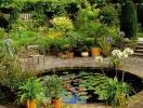 Середземноморські ''гості'' квітково-декоративних рослин.