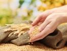 Де можна перевірити посівні якості насіння