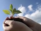 Гарна розсада - щедрий врожай