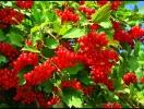 Прогноз фітосанітарного стану основних с/г рослин у господарствах Тернопільської області у вересні 2014 року