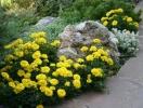 Як захистити сад від ненажерливого шкідника