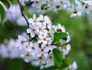 Прогноз фітосанітарного стану основних с/г рослин у господарствах Тернопільської області в квітні 2014 року