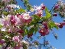 Прогноз фітосанітарного стану основних с/г рослин у господарствах Тернопільської області в травні 2014 року