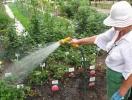 Осінній догляд за садом