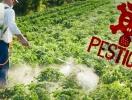 Використання фальсифікованих засобів захисту рослин