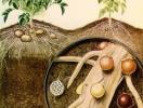 Щодо виявлення золотистої картопляної нематоди.